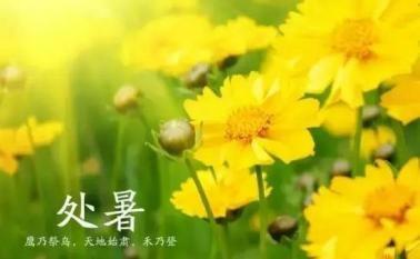 今日处暑:露蝉声渐咽,秋日景初微